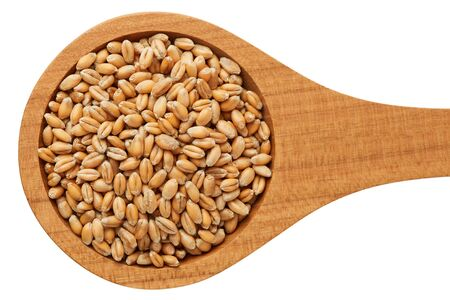Raw wheat grain in wooden spoon isolated on white background 免版税图像