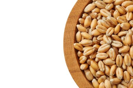 Raw wheat grain in wooden spoon isolated on white background. Top view with copy space