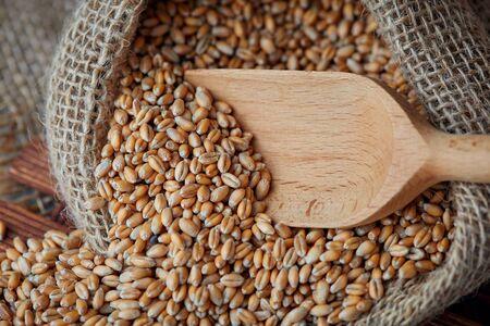 Close up of raw wheat grain in burlap sack 免版税图像