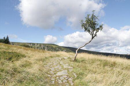 sudetes: Lonely tree near strzecha akademicka Sudetes
