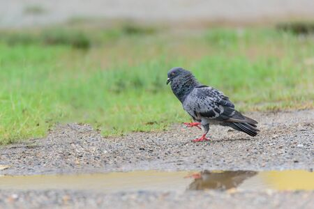meant: Dove is the bird in the Columbidae Usually the word pigeon are meant to feed the pigeons. Apart from the pigeons are called wild pigeons. Stock Photo