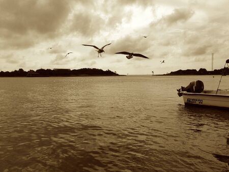 oceanfront: Seagulls at boat dock on Ocracoke island, NC