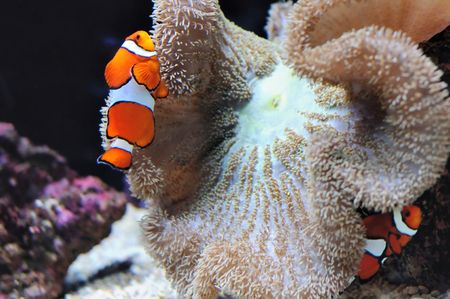 Marlin finding Nemo under water