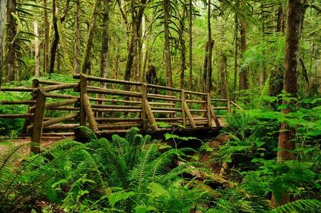 Wooden footbridge in dense tropical rainforest