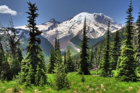 Mooi portret van Mt Rainier van Sunrise punt met weelderige groene weiden en conische pijnbomen