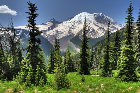 Beautiful portrait of Mt Rainier from Sunrise point with lush green meadows and conical pine trees Standard-Bild