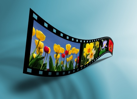 Beautiful flowers photography in a 3 dimensional film strip
