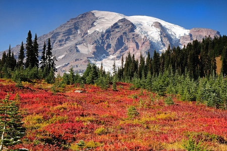 Paradise meadows covered with autumn colors at Mount Rainier national park