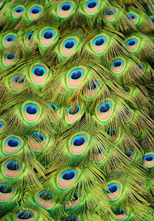 Background with patterns made of peacock feather photo