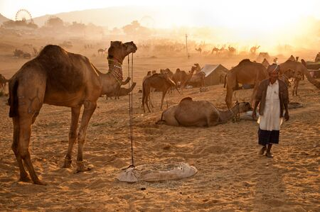 PUSHKAR, INDIA - NOVEMBER 8: A camel trader attends the Pushkar cattle fair on November 8, 2011 in Pushkar, Rajasthan, India. Pilgrims and camel traders flock to the holy town for the annual fair.