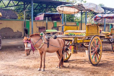 tanga: Traditional horse cart also known as Tanga in Murshidabad, West Bengal, India, used mainly for carrying tourists around the city.