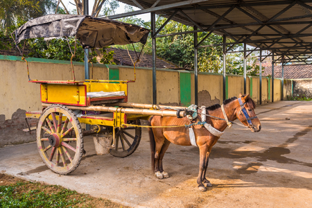 horse cart: Traditional horse cart also known as Tanga in Murshidabad, West Bengal, India, used mainly for carrying tourists around the city.