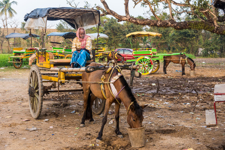 horse cart: MURSHIDABAD, INDIA - JANUARY 23: An Indian coachman waits for passengers on his horse cart on January 23, 2016 in Murshidabad, West Bengal, India. Horse carts are very popular in Murshidabad.