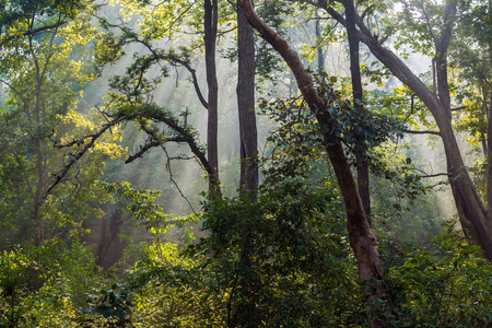 Dense tropical forest of Betla which is home to the Royal Bengal tiger