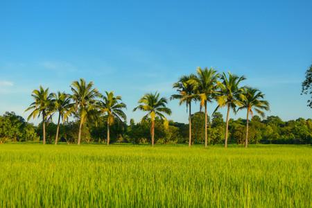 Campo verde en el sudeste de Asia Foto de archivo
