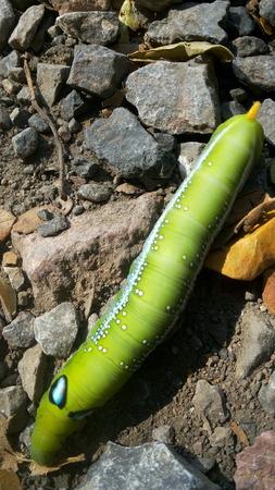 worm: Green Worm Stock Photo