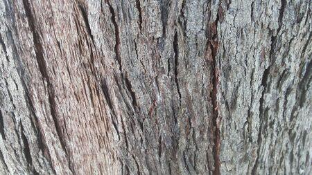 differ: ฺBark Wooden Stock Photo