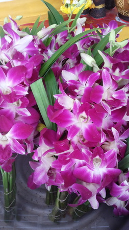 white orchids: Purple and white orchids