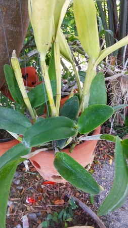 orchid house: Orchid Plant