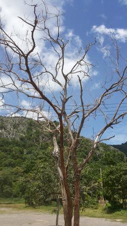 tree dead: Dead Tree Archivio Fotografico
