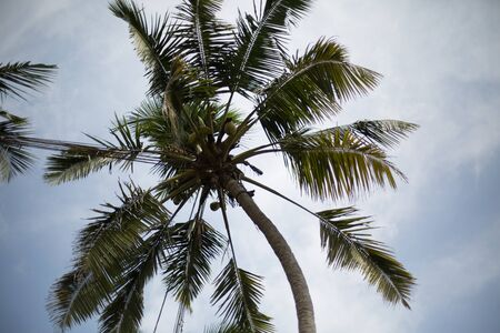the view from below: palm tree on blue sky view from below Stock Photo