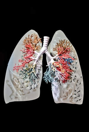 bronchioles: Lungs