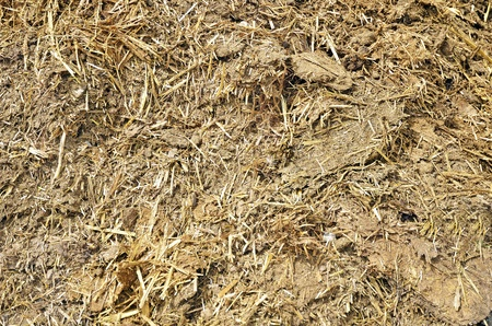 manure: manure, fertilizer for plants