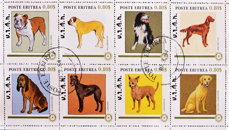 ERITREA - CIRCA 1984: A stamp printed in Eritrea showing different breeds of dogs, serie, circa 1984 Stock Photo - 10419743