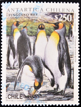 king penguins: CHILE - CIRCA 1996: A stamp printed in Chile shows a group of king penguins in the Antarctic Chilean, circa 1996  Stock Photo