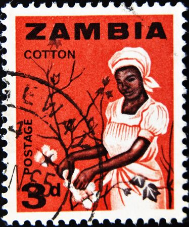 zambia: ZAMBIA - CIRCA 1964: A stamp printed in Zambia shows a woman picking cotton, circa 1964