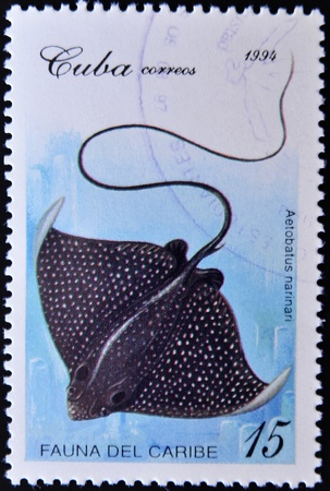 narinari: CUBA - CIRCA 1994: A stamp printed in Cuba shows a narinari Aetobatus within the fauna of the Caribbean series, circa 1994