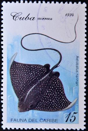 philatelist: KUBA - CIRCA 1994: Ein Stempel in Kuba gedruckt zeigt eine narinari Aetobatus innerhalb der Fauna der Karibik-Reihe, etwa 1994