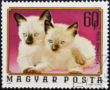HUNGARY - CIRCA 1974: A stamp printed in Hungary shows Siamese kittens, circa 1974  photo