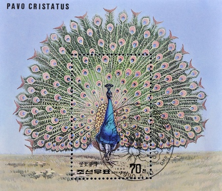 phasianidae: NORTH KOREA - CIRCA 1990: A stamp printed in DPR Korea shows a pavo cristatus, circa 1990