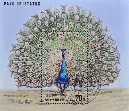 pavo: NORTH KOREA - CIRCA 1990: A stamp printed in DPR Korea shows a pavo cristatus, circa 1990