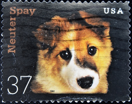 spay: UNITED STATES OF AMERICA - CIRCA 2002: A stamp printed in the United States of America shows image dog, series, circa 2002