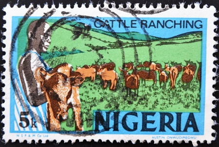 ranching: NIGERIA - CIRCA 1973: Un sello impreso en Nigeria muestra la cr�a de ganado, alrededor de 1973