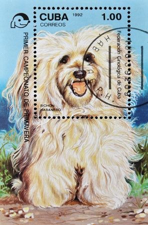 havanese: CUBA - CIRCA 1992: A stamp printed in Cuba shows a dog, Havanese, circa 1992 Stock Photo