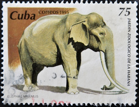 CUBA - CIRCA 1995: A stamp printed in Cuba dedicated to the Havana Zoo, shows a elephant maximus, circa 1995 Stock Photo - 11139857