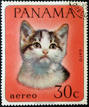 PANAMA - CIRCA 1980: A stamp printed in Panama shows a cat, circa 1980  photo