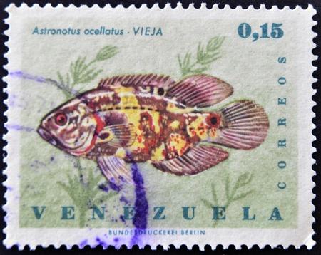 astronotus: VENEZUELA - CIRCA 1980: A stamp printed in Venezuela shows a astronotus ocellatus, circa 1980