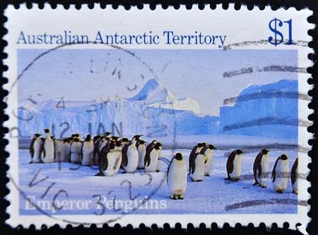 AUSTRALIA - CIRCA 1985: A stamp printed in Australian antarctic territory shows emperor penguins, circa 1985 Stock Photo - 11438874