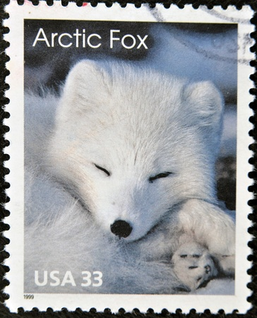 arctic fox: UNITED STATES OF AMERICA - CIRCA 1999: A stamp printed in USA shows an arctic fox, circa 1999