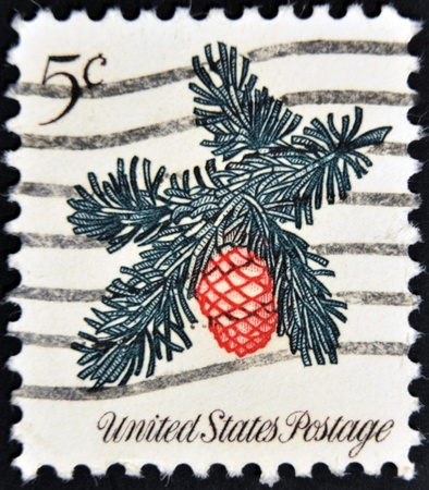 UNITED STATES OF AMERICA - CIRCA 1964: A stamp printed in USA shows flower of pine , circa 1964 photo
