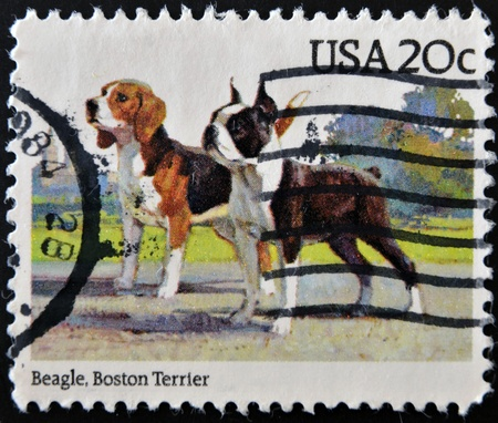 UNITED STATES OF AMERICA - CIRCA 1984: A stamp printed in USA shows beagle and Boston terrier, circa 1984 photo
