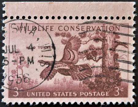 UNITED STATES OF AMERICA - CIRCA 1956: stamp printed in USA, shows wild turkey, wildlife conservation, circa 1956 photo