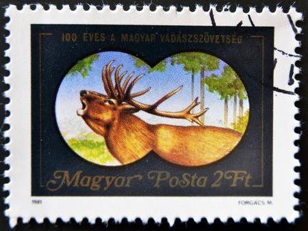 HUNGARY - CIRCA 1981 :A stamp printed in Hungary shows the image of deer through binoculars, circa 1981