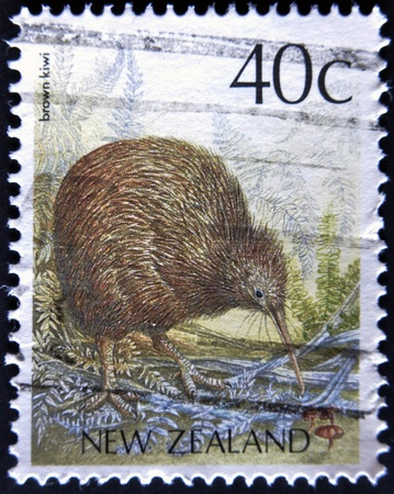 NEW ZEALAND - CIRCA 1988: A stamp printed in New Zealand shows Brown Kiwi, Apteryx australis, circa 1988  photo