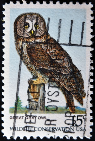 USA - CIRCA 1978 : A stamp printed in the USA shows Great Horned Owl, Wildlife Conservation, circa 1978 Stock Photo - 11815661