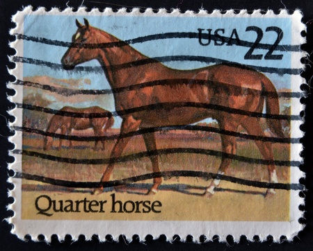 quarter horse: UNITED STATES OF AMERICA - CIRCA  1986: A stamp printed in USA shows the horse, circa 1986
